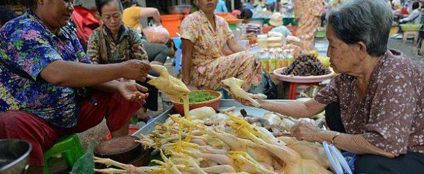 กัมพูชาเฝ้าระวังการแพร่ระบาดของเชื้อไวรัส H7N9